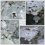 four ice studies