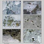 six ice studies - panel
