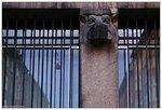 urban hippopotamus